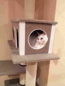 best cat trees for small apartment